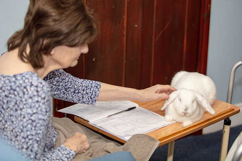 Lulworth House Pet Therapy